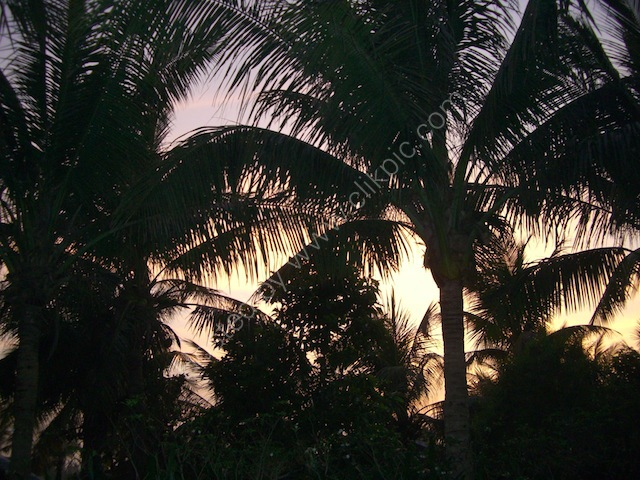 Sunrise over the Palms, The Nam Hai, Hoi An