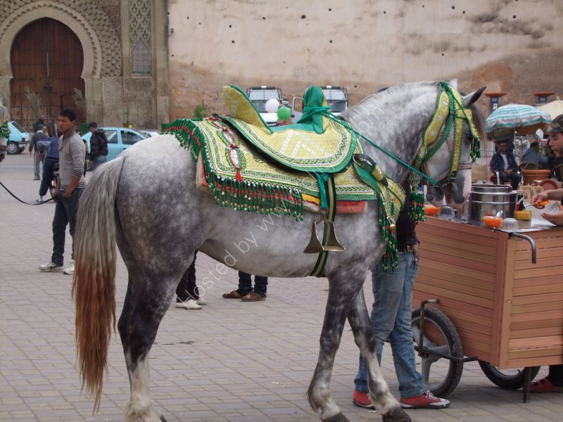 Moroccan Horse Saddle