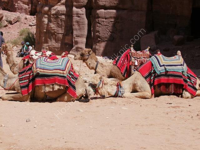Resting Camels, Petra
