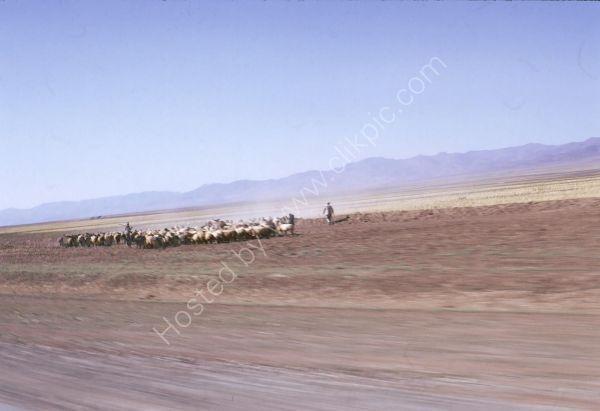 Iranian Shepherds between Tehran and Turkish Border