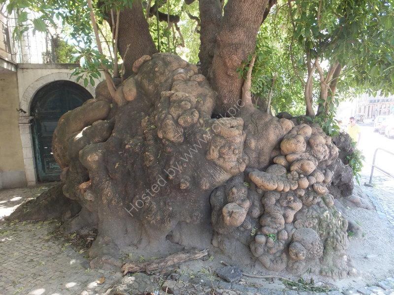 Unusual Tree Root
