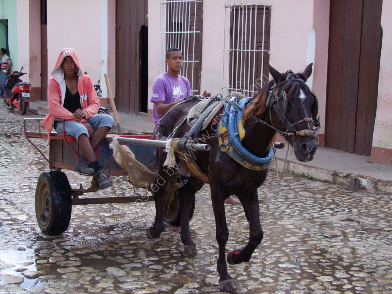 Horse & Cart, Trinidad