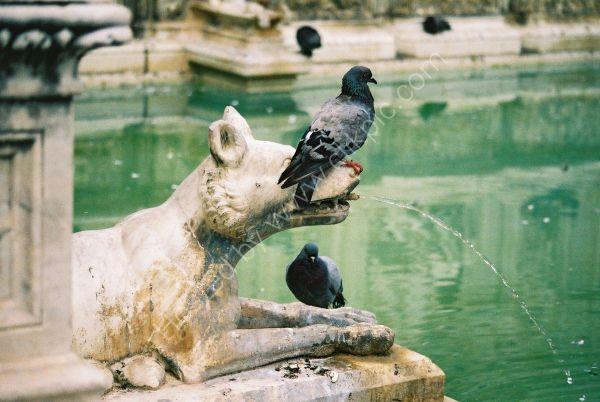 Fountain, Piazza del Campo, Sienna, Tuscany