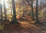 """Autumn Light, Caddam Wood""."
