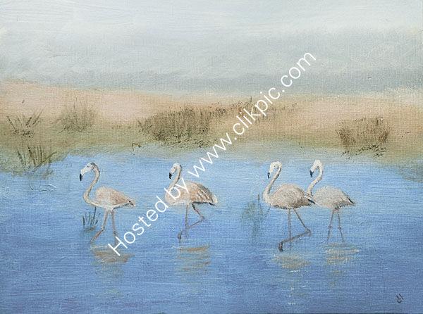 Strutting Flamingos, India.
