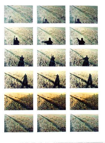 Harvest Field Series