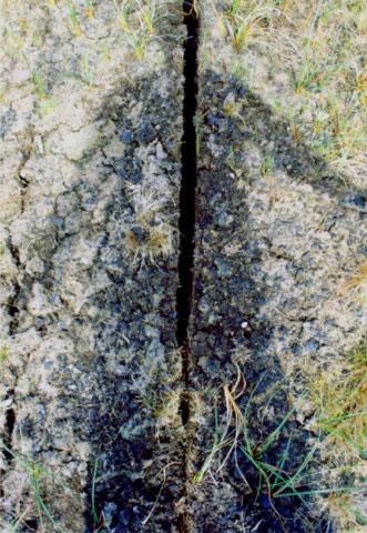 Split Peat.