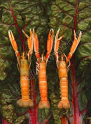 Hands Up Langoustines!
