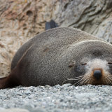Seal at rest