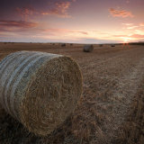 Hay bale at Sunsut