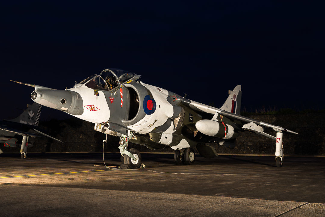 Harrier at twilight.