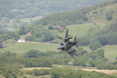 Two Harriers