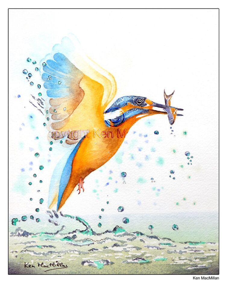 Kingfisher catching fish.