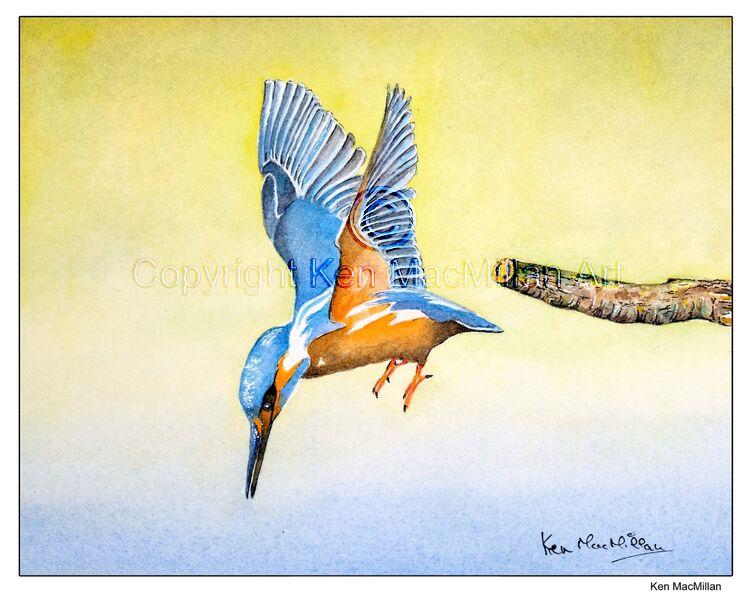 Kingfisher in flight ( study 3 )