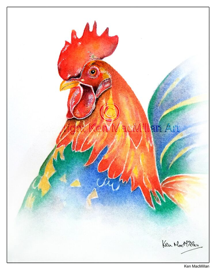 Pen, ink and watercolour of rooster (study 2).