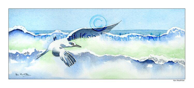 Gull flying in surf.