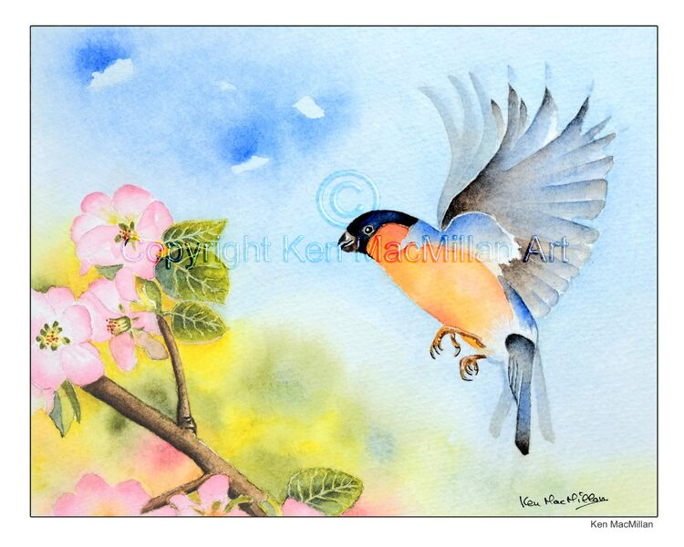 "Bullfinch with apple blossom. Watercolor original measures 10"" x 8""."