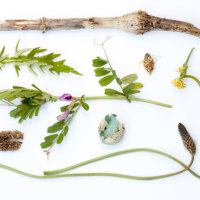 Found in the Fields 2 (Swaddywell 7th May), Kathryn Parsons, one of a collection of photographs