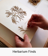 Herbarium Finds th w text