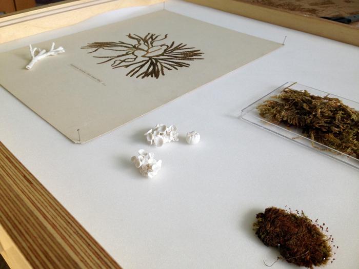 Herbarium Finds; Porcelain Plants, Kathryn Parsons