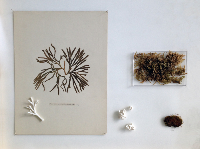 Herbarium Finds; Porcelain Plants, Kathryn Parsons