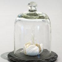 """""""Rose Coral"""" Kathryn Parsons (2017) hand modelled porcelain, slate, bell jar"""
