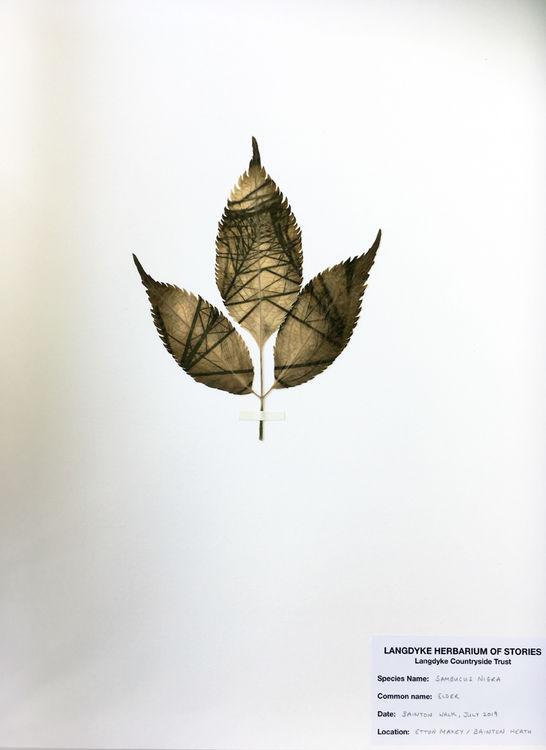 Herbarium of Stories, Kathryn Parsons 2019