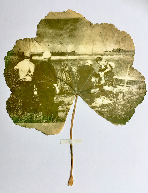 Herbarium of Stories (detail), Kathryn Parsons 2019
