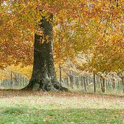 An English Autumn