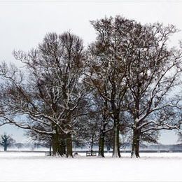 Winter in Norfolk