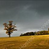 Dorset Light