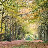 Autumn in Felbrigg