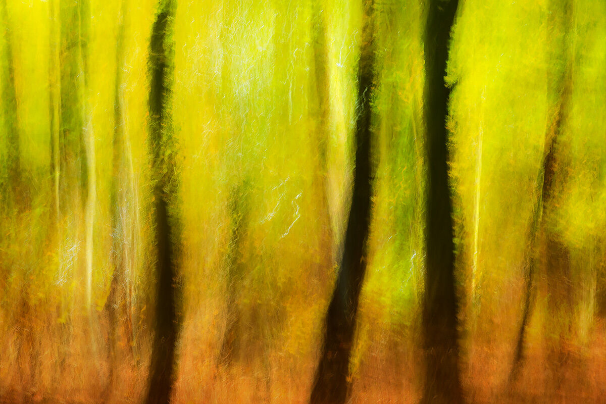 Abstract Trees