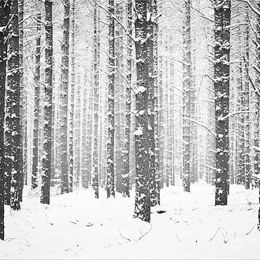 Woodland Winter