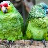 Two green birds