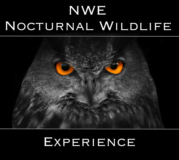 NWE Logo 600
