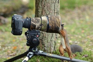 Wildlife, Landscapes and Environmental Images
