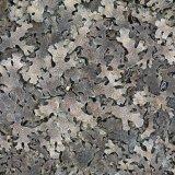 Lichen leaf type Lungwort