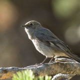 Townsend,s Solitaire