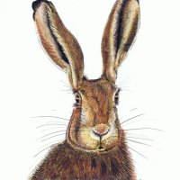 Hare Here