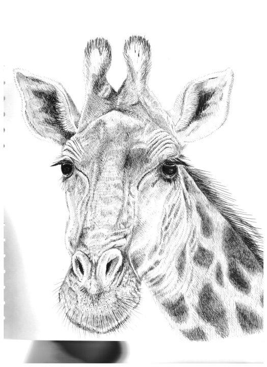 Sketchbook Giraffe Drawing