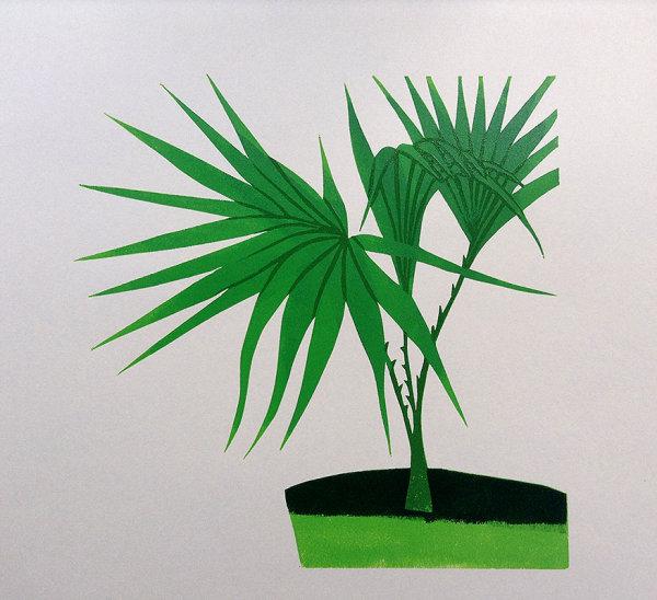 Livistona Rotundifolia