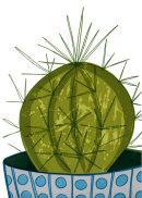 Cactus I, 2104.