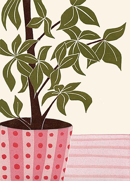 Parasol Plant