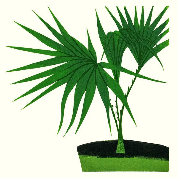 Kerry Day - Livistona Rotundifolia - Lino Print