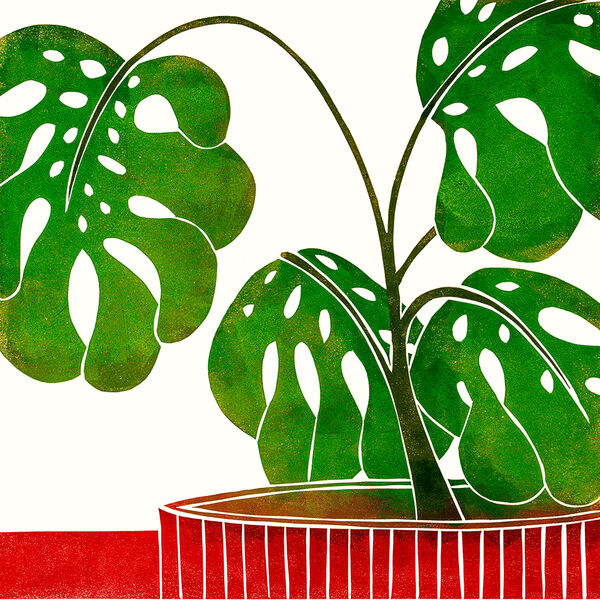 Kerry Day - Swiss Cheese Plant - Lino Print