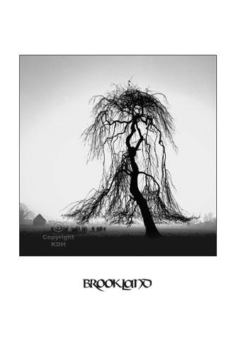 The Tree at Brookland
