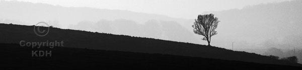 Downland