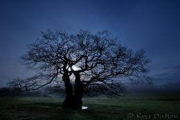 Night-Oak