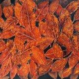 Tints of Autumn